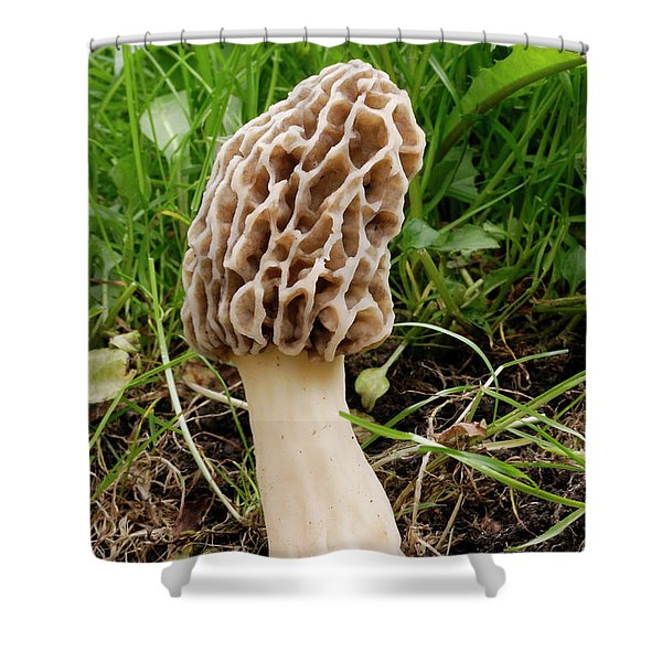 One Fine Morel Shower Curtain