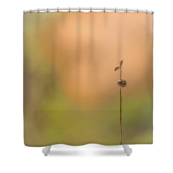 oNe Shower Curtain