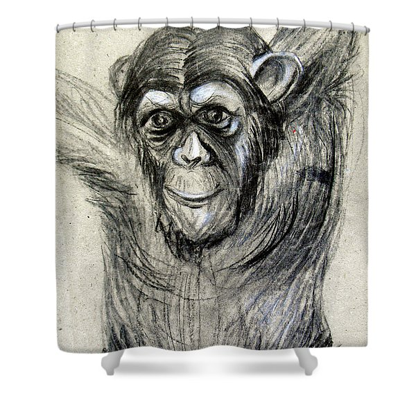 One Of A Kind Original Chimpanzee Monkey Drawing Study Made In Charcoal Shower Curtain