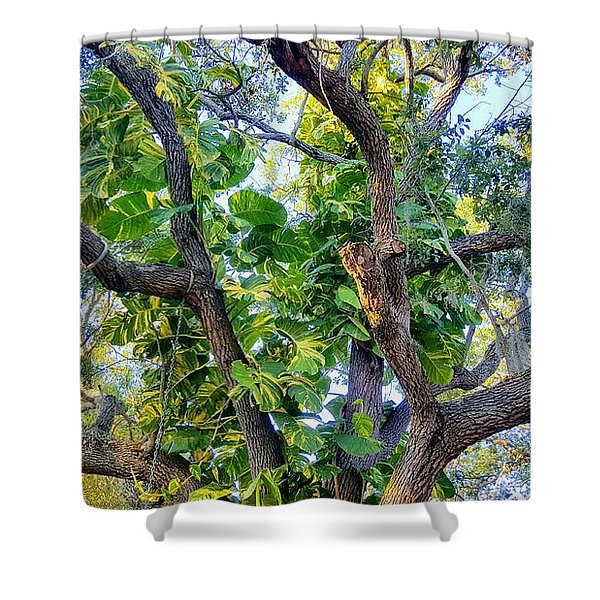 Oneness Discovery Shower Curtain