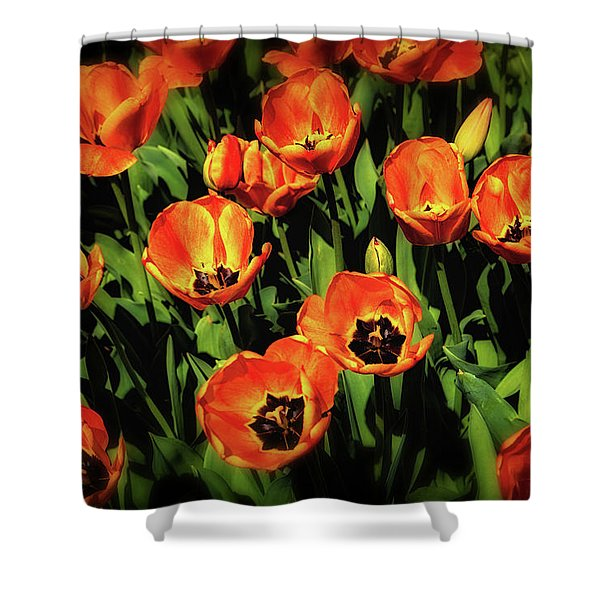 Open Wide - Tulips On Display Shower Curtain