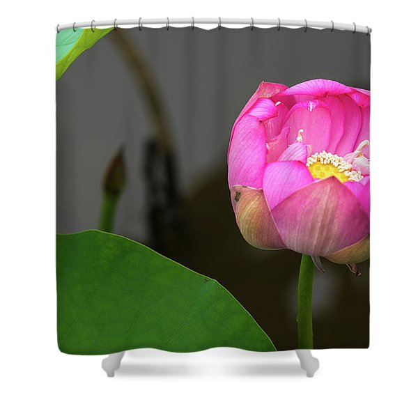 Opening Lotus Lily Shower Curtain