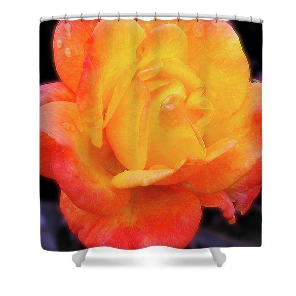 Orange And Violet Rose Shower Curtain
