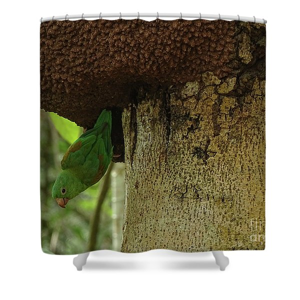 Orange -chinned Parakeet  On A Termite Mound Shower Curtain