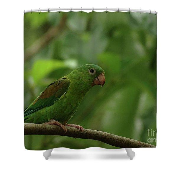 Orange-chinned Parakeet  Shower Curtain