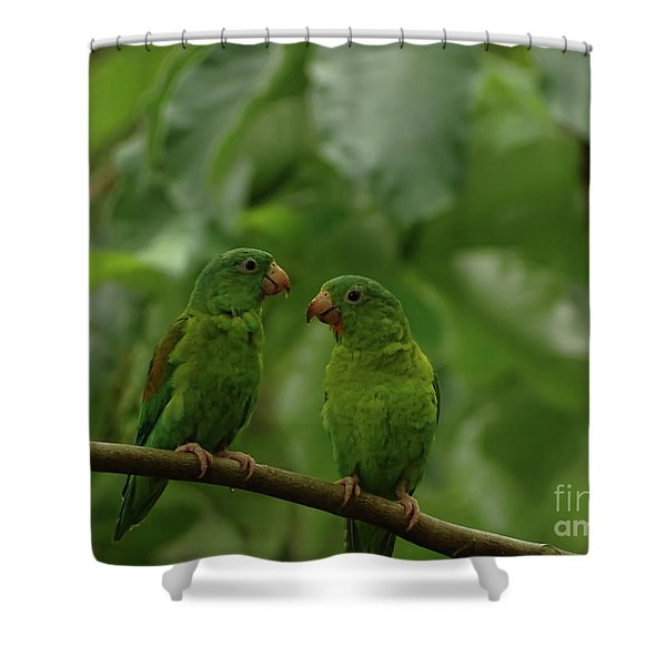 Orange-chinned Parakeets-  Shower Curtain