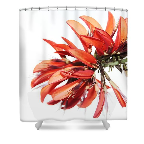 Orange Clover I Shower Curtain
