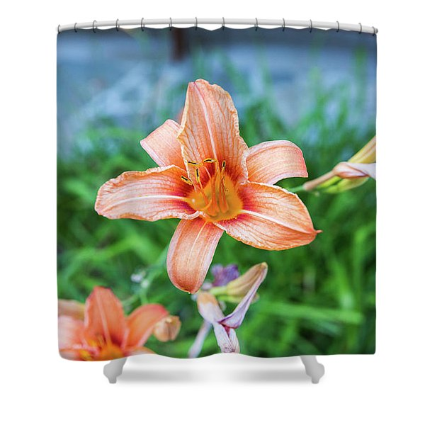 Shower Curtain featuring the photograph Orange Daylily by D K Wall