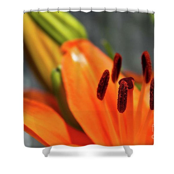 Orange Lily Close Up Shower Curtain