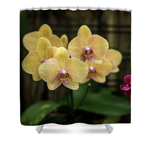Orange Orchids Shower Curtain