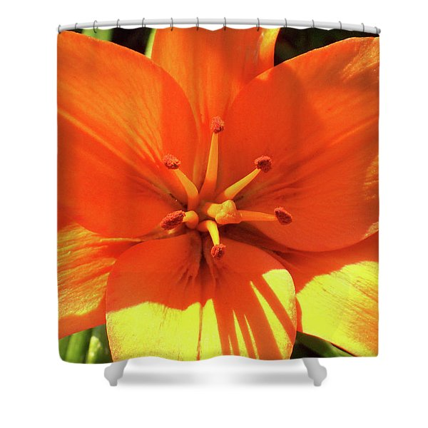 Shower Curtain featuring the photograph Orange Pop by Cris Fulton
