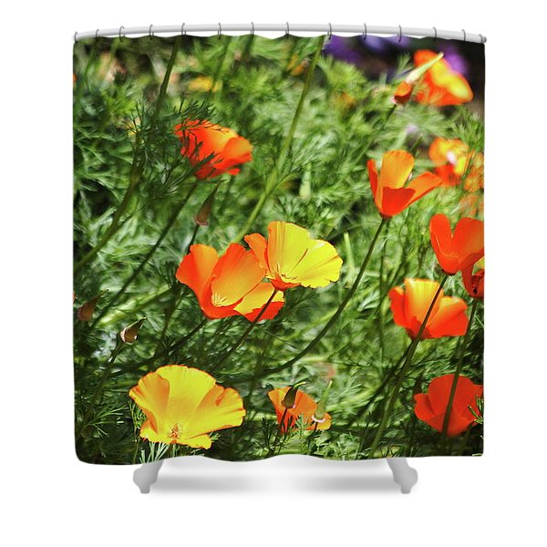 Orange Poppy Flowers . R1269 Shower Curtain by Wingsdomain Art and Photography