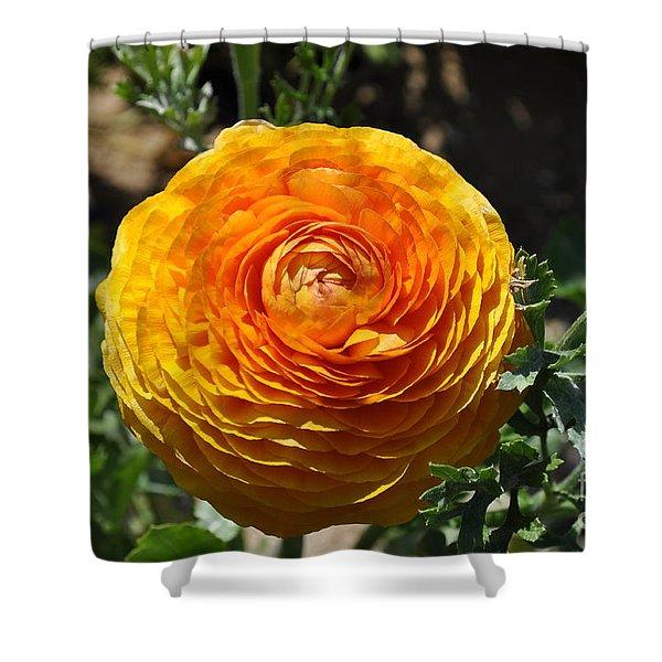 Orange Ranunculus Shower Curtain