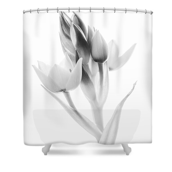 Orange Star - Fine Art Wall Decor Shower Curtain