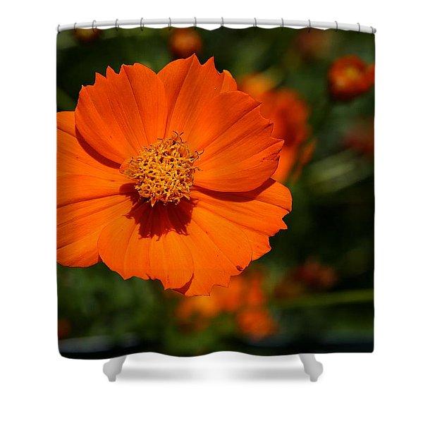 Orange Sulfur Cosmos Flower Shower Curtain