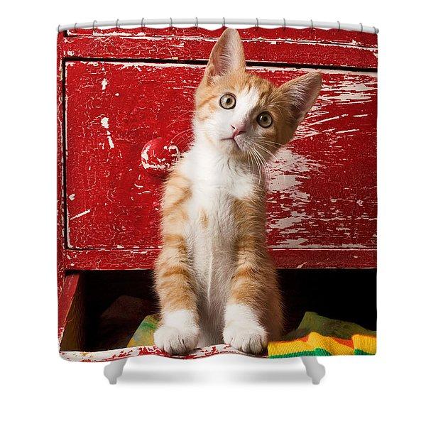 Orange Tabby Kitten In Red Drawer  Shower Curtain