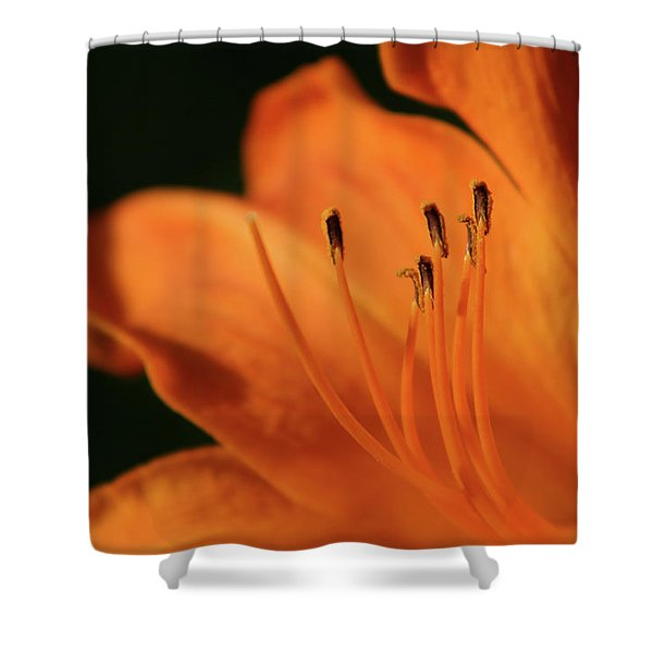 Orange Wave 3096 H_2 Shower Curtain