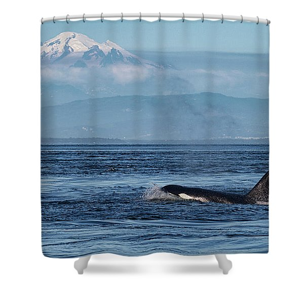 Orca Male With Mt Baker Shower Curtain