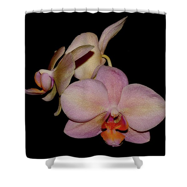 Orchid 2016 1 Shower Curtain