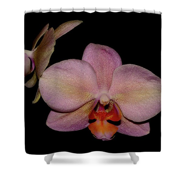 Orchid 2016 3 Shower Curtain