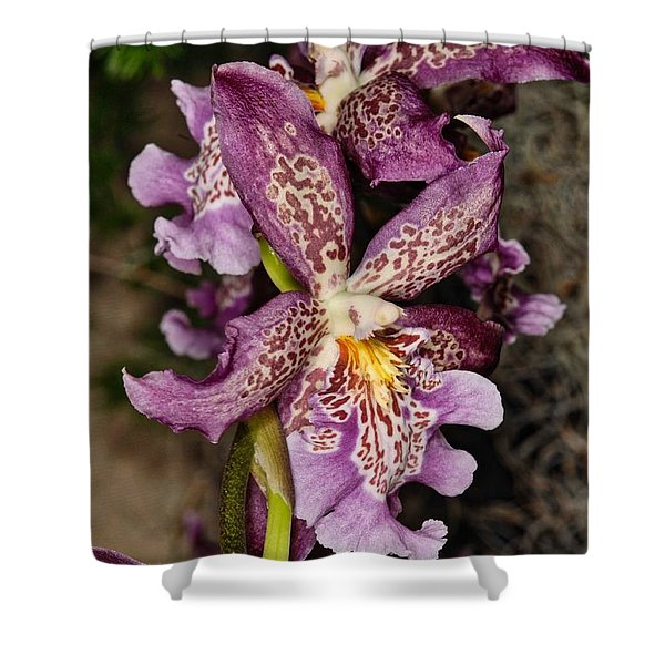 Orchid 347 Shower Curtain