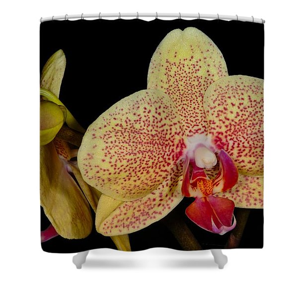 Orchid 377 Shower Curtain