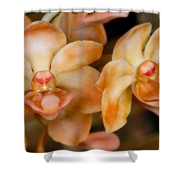 Orchid 392 Shower Curtain
