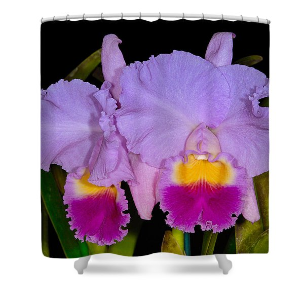 Orchid 428 Shower Curtain