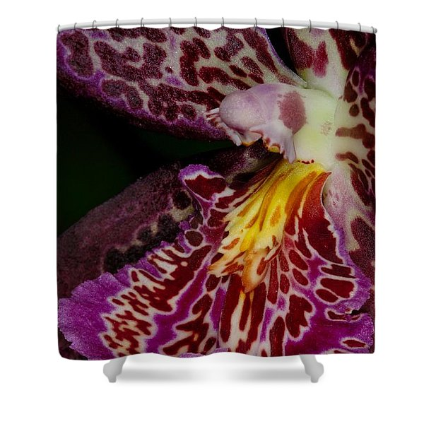 Orchid 459 Shower Curtain