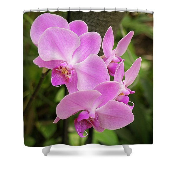 Orchid #6 Shower Curtain