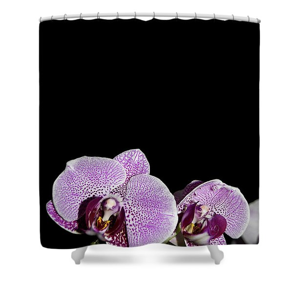 Orchid Blooms Shower Curtain