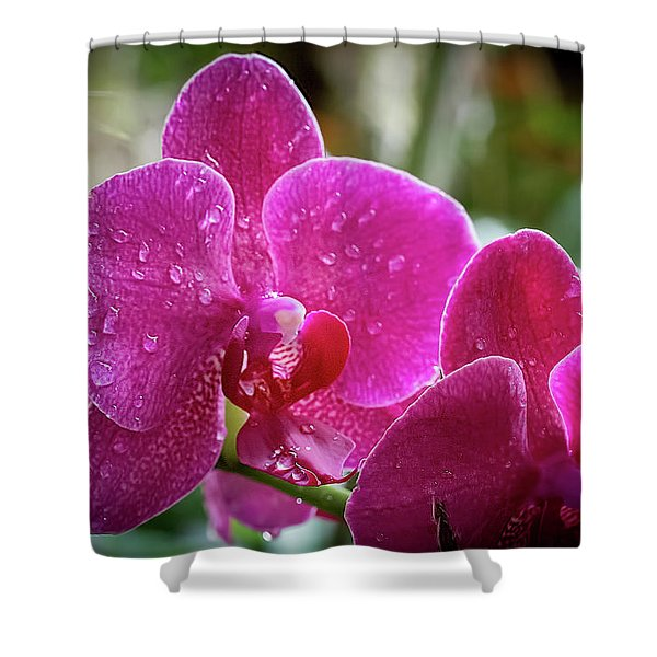 Orchid Dew Shower Curtain