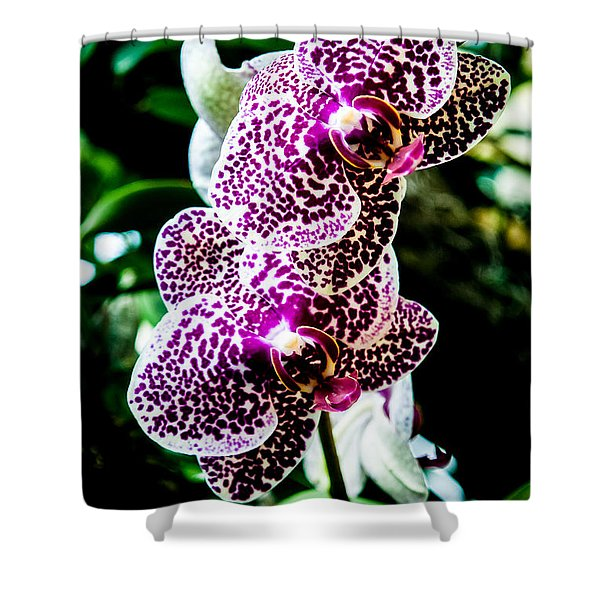 Orchid - Pla236 Shower Curtain