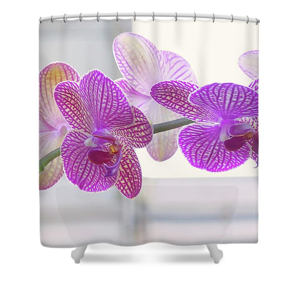 Orchid Spray Shower Curtain
