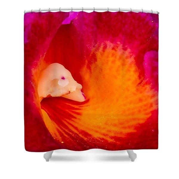 Orchid Vortex 458 Shower Curtain