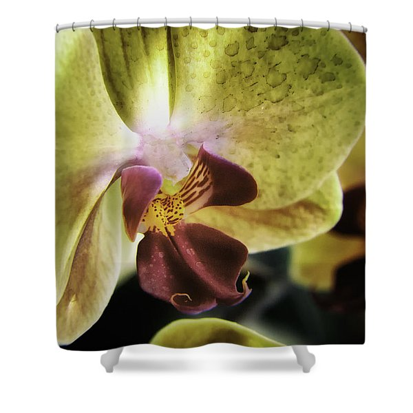 Orchid With A Tongue Shower Curtain