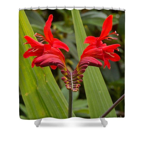 Oregon Flower 1 Shower Curtain