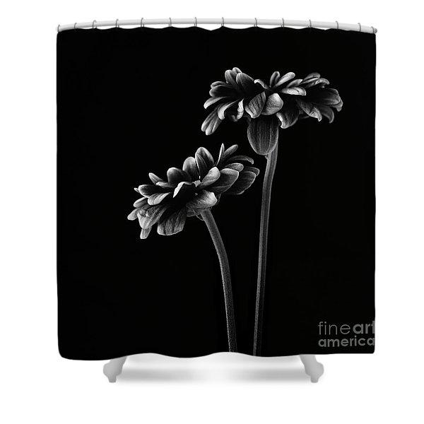 Orinoco Chrysanthemum Shower Curtain