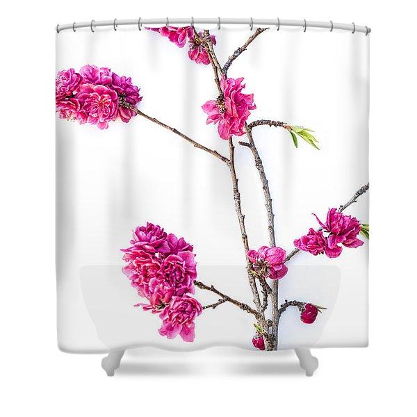 Ornamental Peach  Shower Curtain