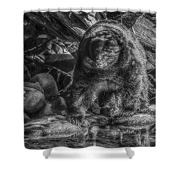 Oservant Black Bear  Shower Curtain