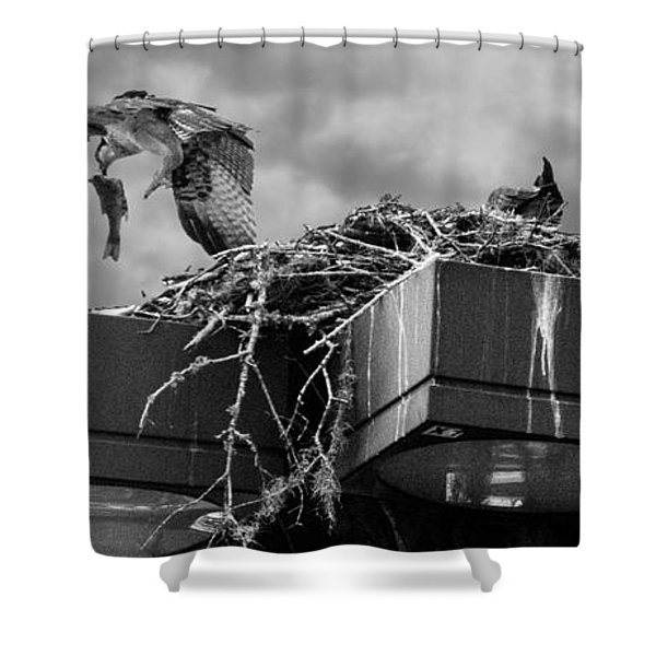 Osprey Carrying Fish To Nest Shower Curtain
