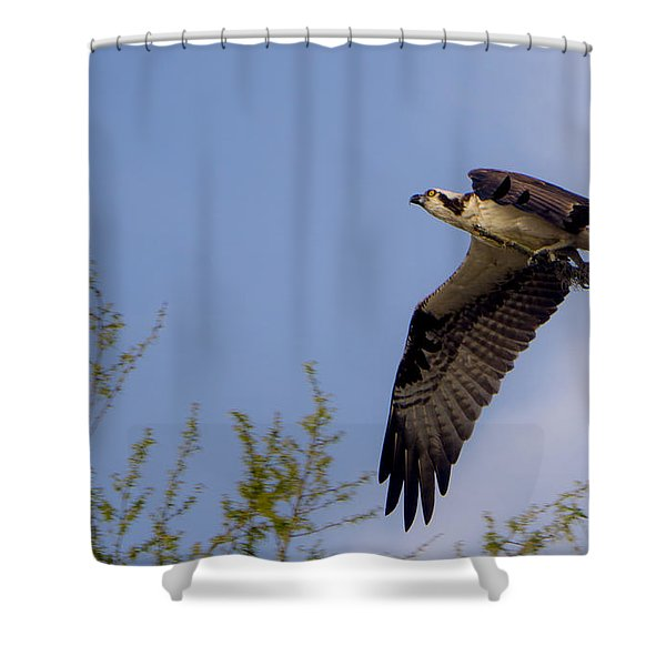 Osprey Collecting Sticks Shower Curtain