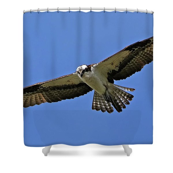 Osprey Glide Shower Curtain