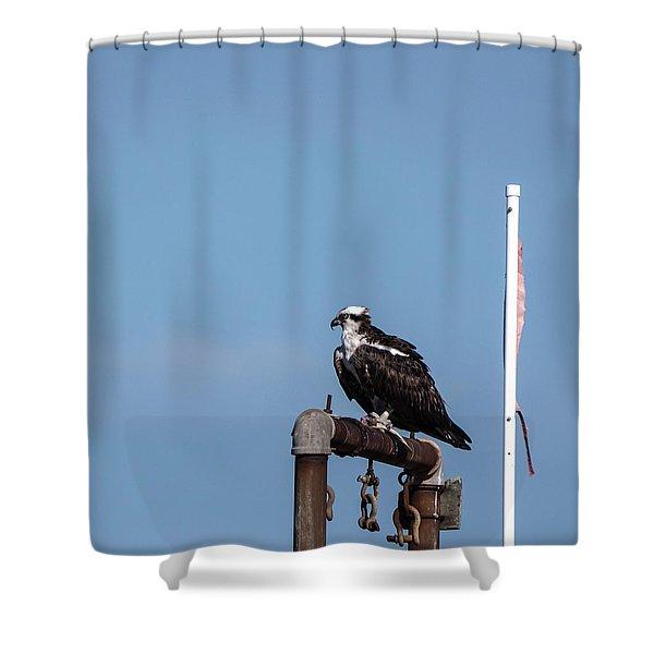 Osprey Having Lunch Shower Curtain