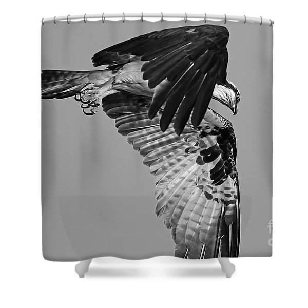 Osprey Hunting Shower Curtain