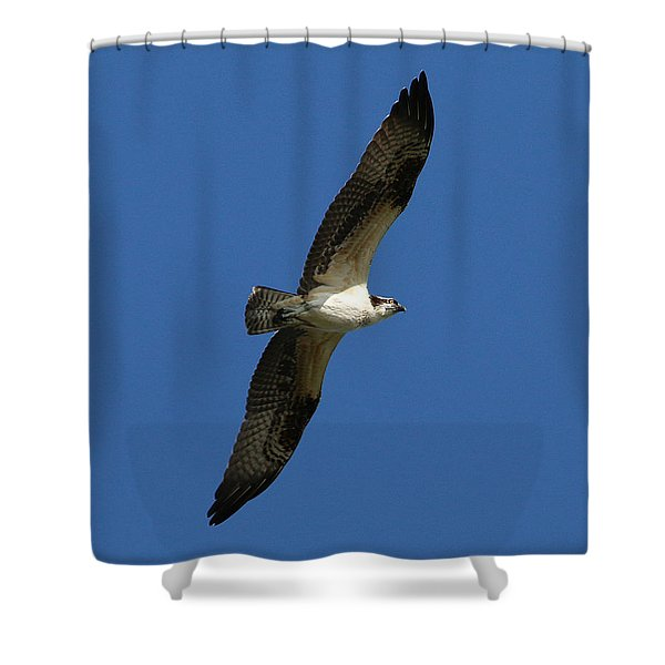 Shower Curtain featuring the photograph Osprey In Blue Sky by William Selander