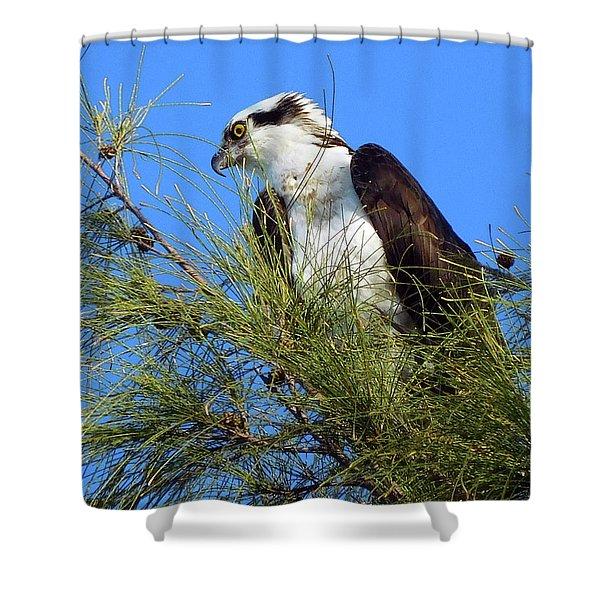 Osprey In Tree Shower Curtain