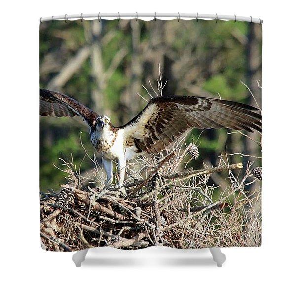Osprey Nest Against Loblolly Shower Curtain
