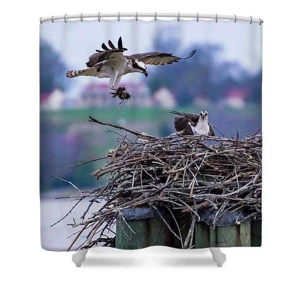 Osprey Nest Building Shower Curtain