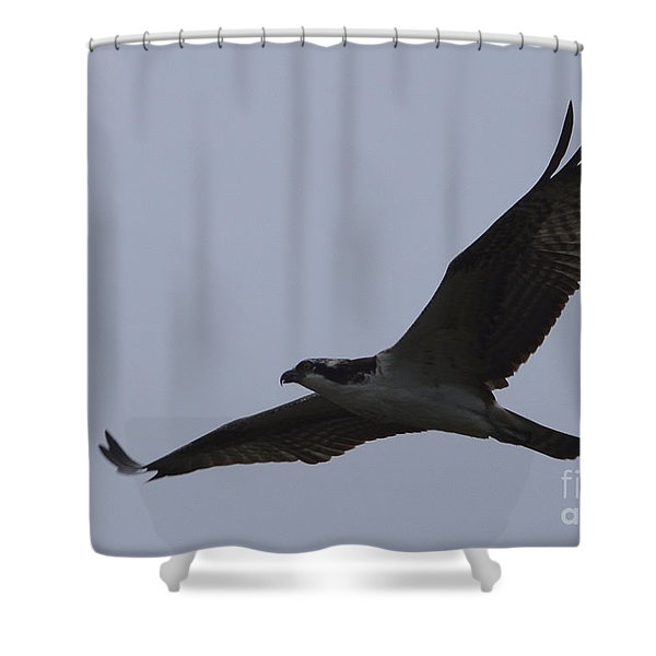 Osprey On The Tygart Shower Curtain